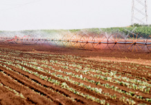 Irrigation system Rainy wings BK - Watering of paprika
